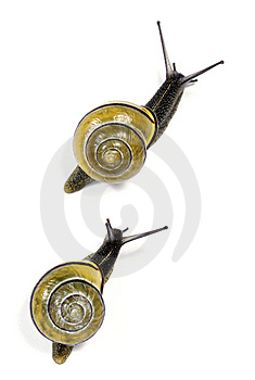 White-lipped  Snails Royalty Free Stock Photo - Image: 14411205