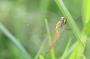 Dragonfly Stock Photo - Image: 14415330