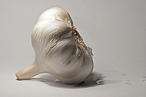 Garlic On White Background Royalty Free Stock Image - Image: 14417556