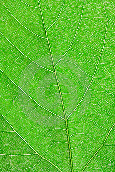 Texture Of Green Leaf Stock Photos - Image: 14418233