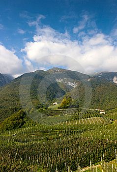 Orchards In The Mountains Stock Image - Image: 14422261