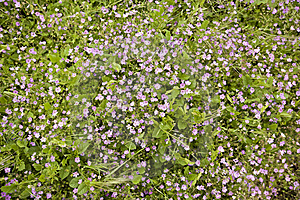 Wild Purple Flowers In A Meadow Royalty Free Stock Image - Image: 14425656