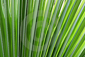 Branch Palm Stock Photography - Image: 14425952