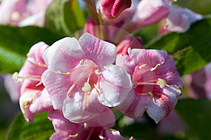 Close Up Of Beautiful Blooming Peach Tree Stock Photography - Image: 14427172