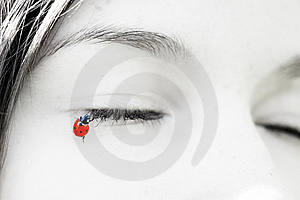 Little Ladybug, Which Sit On The Lashes Girl Stock Photos - Image: 14427853
