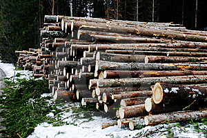 Logs Stock Photos - Image: 14428953