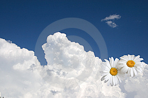 Floral Sky Background, White Clouds Royalty Free Stock Photos - Image: 14429318