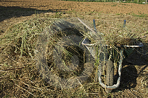 Wheelbarrow With A Haystack Stock Images - Image: 14433844