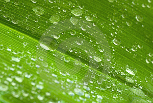 Drops On The Leaf Stock Image - Image: 14435561