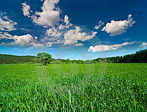 Sky With Clouds And The Green Field Royalty Free Stock Image - Image: 14435616