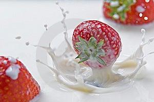 Strawberries Splashing In Milk Stock Image - Image: 14437161