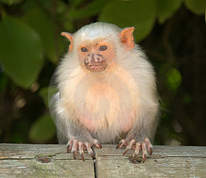 Cute  Small Monkey Stock Photography - Image: 14440942