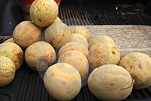 Farmers Market Cantalope Royalty Free Stock Images - Image: 14442759