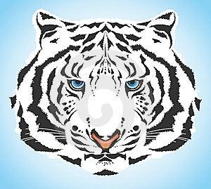 White Tiger Stock Image - Image: 14443001