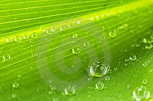 Water Drops On Green Leaf Stock Image - Image: 14448421