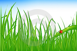 Grass With Ladybird. Vector Stock Photos - Image: 14449413