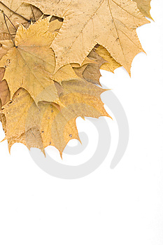 Autumn Maple Leaves Royalty Free Stock Photography - Image: 14449947