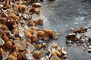 Coconuts At Thaipusam Stock Photos - Image: 14450823