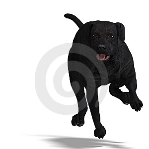 Labrador Retriever Dog. 3D Rendering With Royalty Free Stock Photos - Image: 14457078
