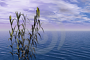 Bamboo And Sea Royalty Free Stock Photography - Image: 14460247