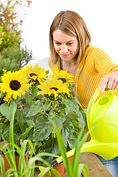 Gardening - woman pouring flowers Royalty Free Stock Image