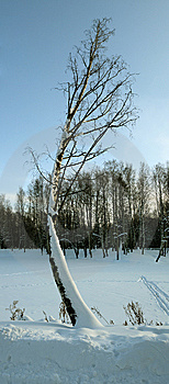 Winter Landscape Stock Images - Image: 14462614