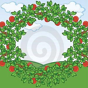 Apples Frame Stock Image - Image: 14463881