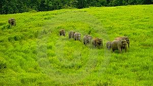 Wilds Elephant Royalty Free Stock Photo - Image: 14466425
