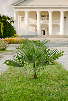 Palm In Foreground Of Palace Royalty Free Stock Photos - Image: 14469888