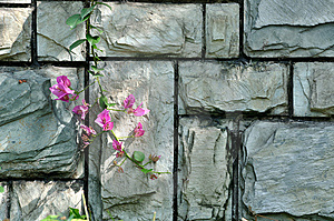 Stone Wall Under Shadow And Pink Flower Royalty Free Stock Images - Image: 14472159