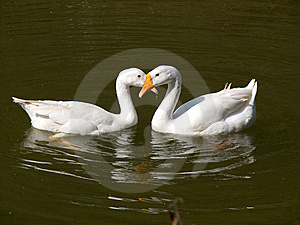 True Love Royalty Free Stock Photos - Image: 14472928