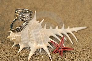 Wedding Rings Stock Photos - Image: 14474803