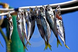 Stockfish Stock Images - Image: 14474934