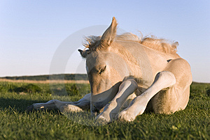 Beautiful Newborn Foal Stock Photos - Image: 14478393