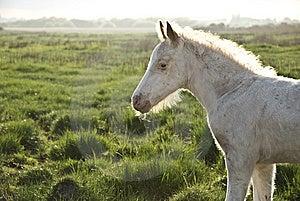 Beautiful White Newborn Foal Stock Image - Image: 14478651