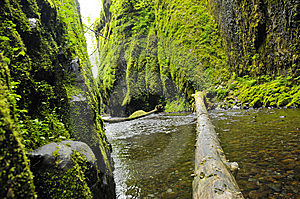 River In Oneonta Gorge Stock Photo - Image: 14481800