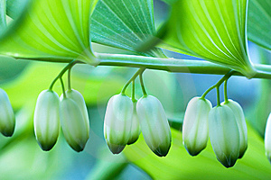 Closed Buds Stock Image - Image: 14482881