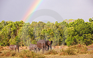 Large Herd Of Bush Elephants (Loxodonta Africana) Stock Photo - Image: 14489250