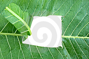Horticultural Horseradish Stock Photo - Image: 14490660