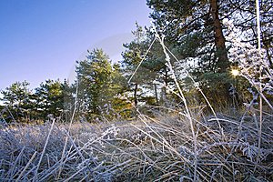 Morning Rime Royalty Free Stock Photos - Image: 14491518