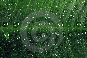 Green Leaf With Rain Drops Royalty Free Stock Photos - Image: 14491558