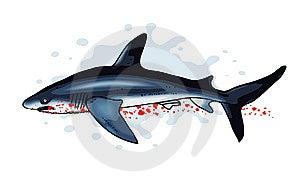 Shark Stock Image - Image: 14495651