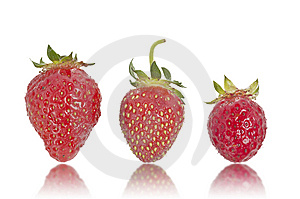 Three Strawberries Royalty Free Stock Photography - Image: 14498607
