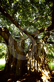 Creepy Tree Royalty Free Stock Photography - Image: 1451547