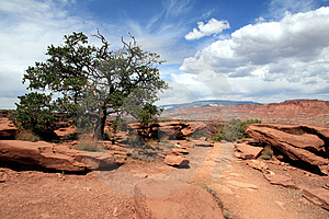 Capital Reef National Park Stock Photos - Image: 1456803