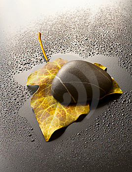Leaf And Stone Royalty Free Stock Photo - Image: 14500375