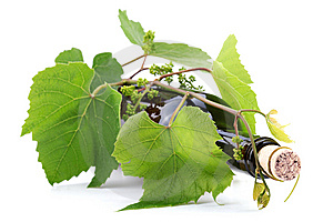 Bottle Of Wine In The Vine Royalty Free Stock Photography - Image: 14501387