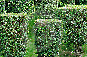 Shaped Bushes In Garden Plant Stock Images - Image: 14510534