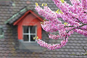 Blossoming Tree Royalty Free Stock Photos - Image: 14511338