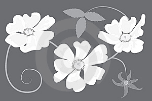 Shrub Rose In Shades Of Grey Royalty Free Stock Images - Image: 14517139